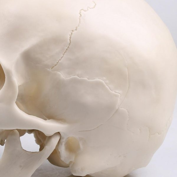header of dead realistic head of death